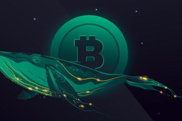 bitcoin whales 2021